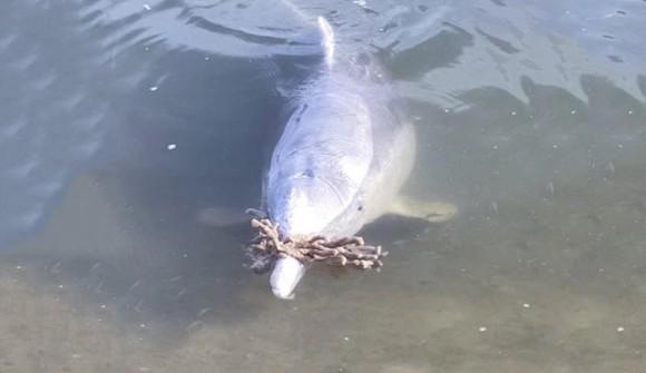 「これどうぞ。代わりに食べ物ください」イルカが人間にプレゼントを渡す習慣を身に着けた(オーストラリア)