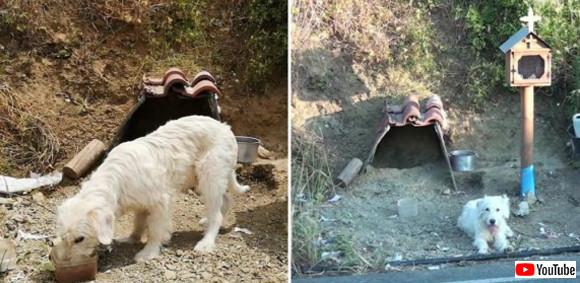 飼い主が事故死した現場で一年半以上、帰らぬ飼い主を待ち続ける犬(ギリシャ)
