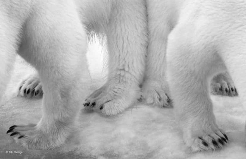 wildlife-photographer-of-the-year-2017-55e