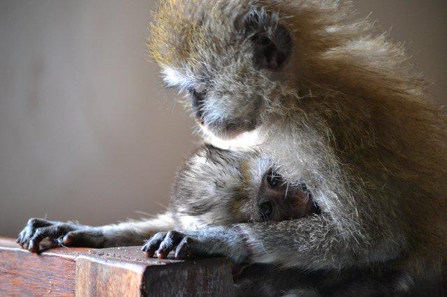 monkey-4
