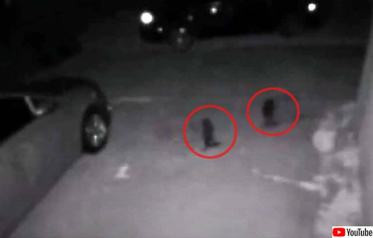 小型のヒトガタ物体が2体監視カメラにとらえられる
