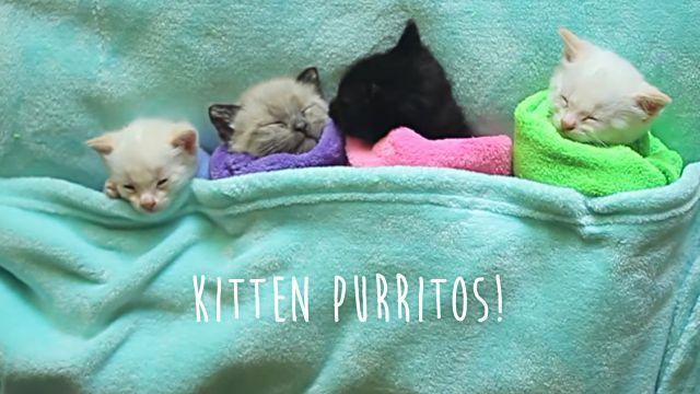 言葉はいらない、必要なのは子猫たちの寝顔だけ。猫巻きプリトーは最強の癒しアイテムなり