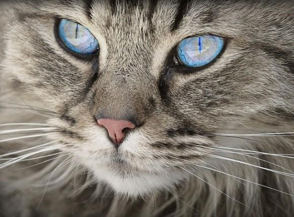 """猫の表情から気持ちを読み取れる""""キャットウィスパラー""""は約10人に1人存在する※簡易チェックテスト付き"""