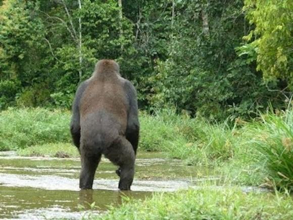 UMAじゃダメですか?九州で絶滅したはずのクマの目撃が相次ぐ