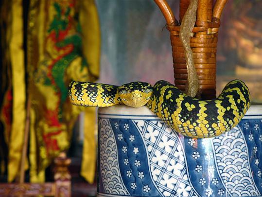 Snake-Temple-Penang