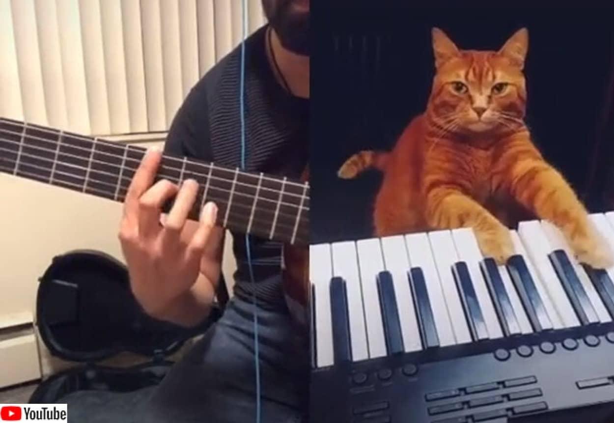 猫のピアノと飼い主のギターでナイスなセッション