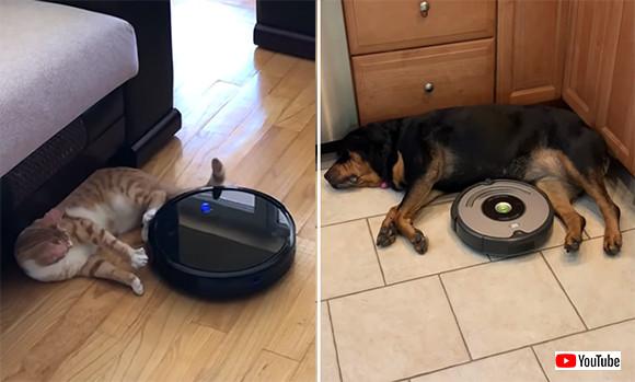 お掃除ロボットルンバに対する犬の反応・猫の反応