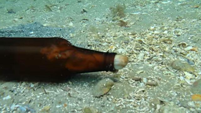 beerbottle0