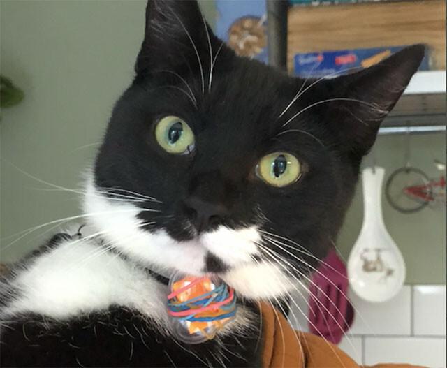 人と人の絆をつなげる郵便配達猫