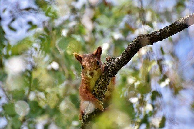 squirrel-4318302_640
