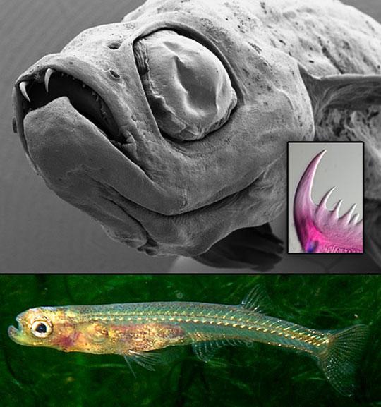 091029-02-dracula-fish-phot