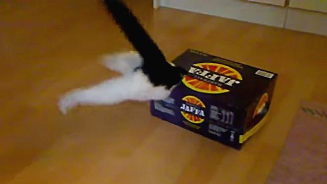 kittenbox4