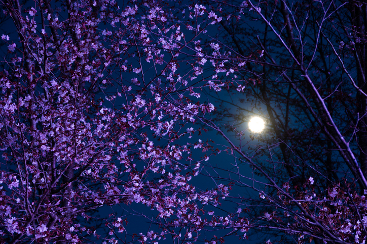 2021年3月29日3:48は満月
