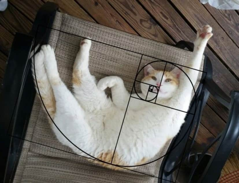 fibonacci-composition-cats-furbonacci-91__700_e