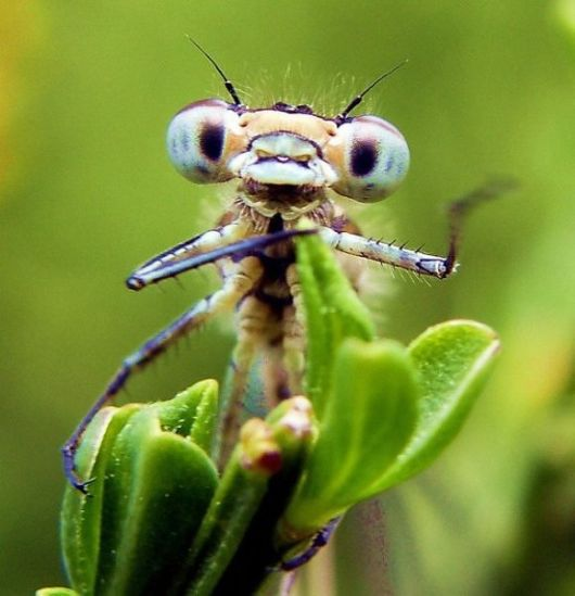 alien_insects_01