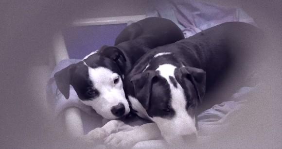 盲目の兄弟の「目」になろうと尽くす捨て犬たちの兄弟愛(米フィラデルフィア)