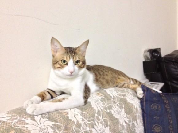 cat3_e