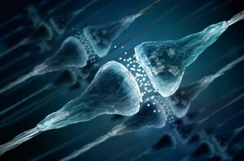 シナプス細胞