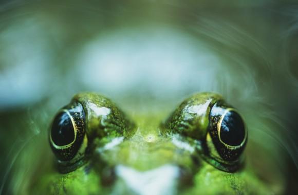 世界初、冷凍したカエルの心臓を復活させることに成功(ロシア研究)