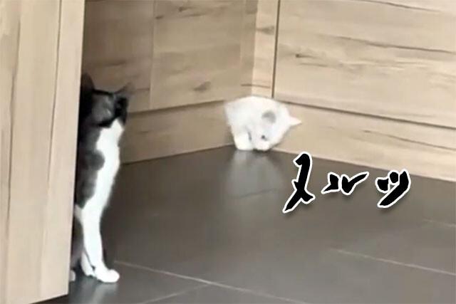 T-1000 かな?液状化した猫、キッチンカウンターから染み出して姿を現を表す