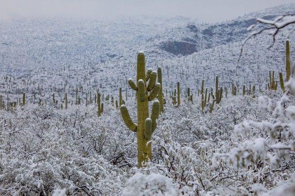 キンッキンに冷えてやがるぜ。砂漠地帯のサボテンに雪が積もる異様な光景(アメリカ・アリゾナ州)