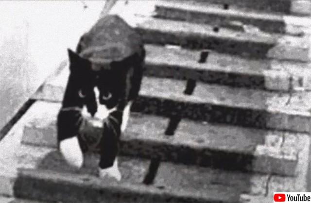 第二次世界大戦中、3度の艦船沈没を生き抜いた奇跡の船乗り猫「不沈のサム」の物語