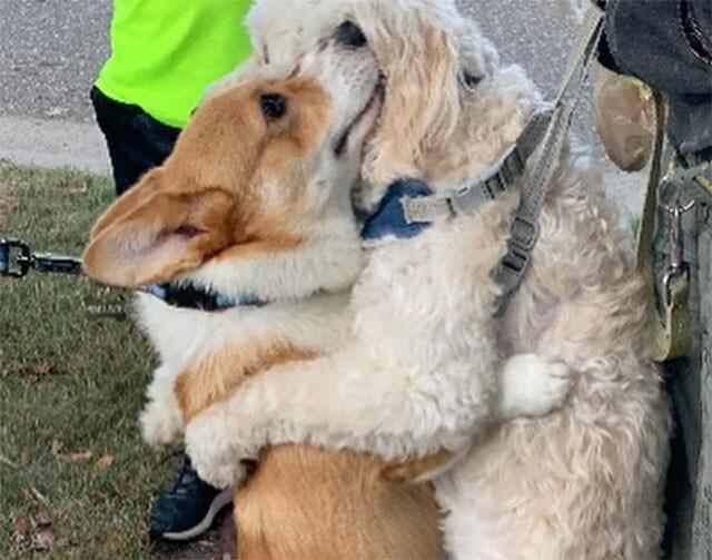 散歩中、出会ったすべての犬をギュっと抱きしめるコーギー犬