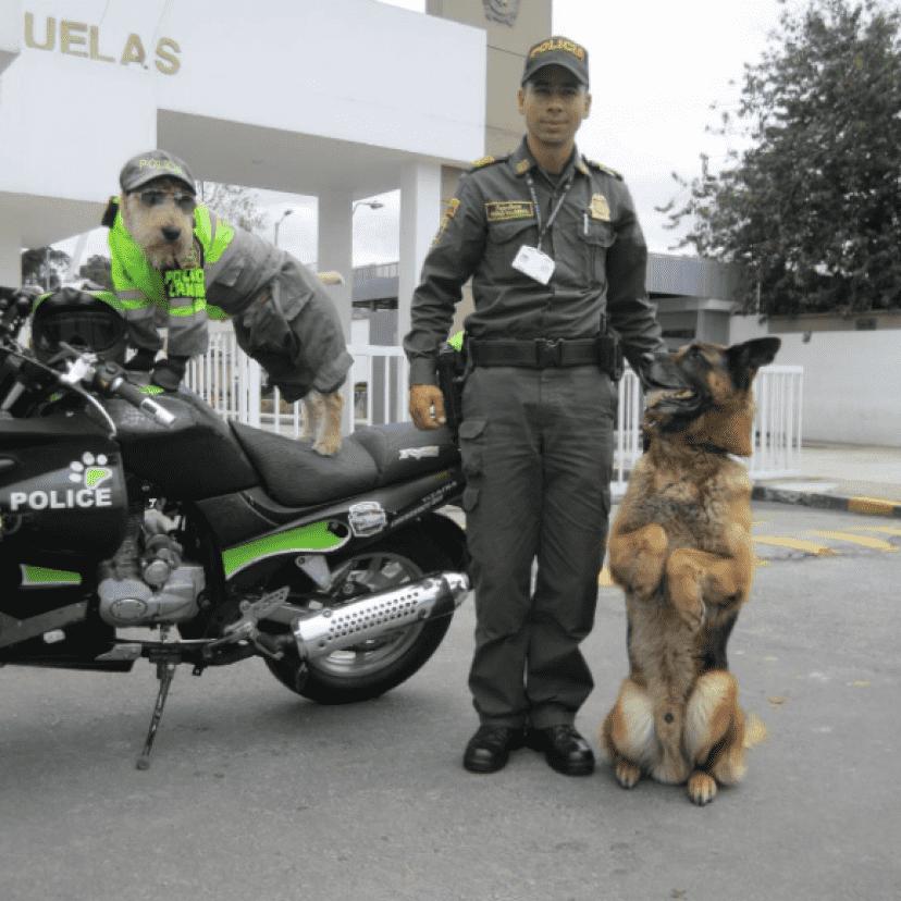 police7_e
