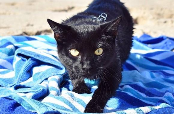 道路わきに捨てられていた黒猫は、新しい飼い主の元、いつの間にか泳ぎの上手なスイマーキャットとなっていた。