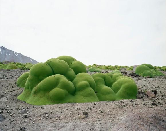 植物には到底かなわない。数千年から数万年も生き抜いている生きている、地球で最も長生きな10の植物