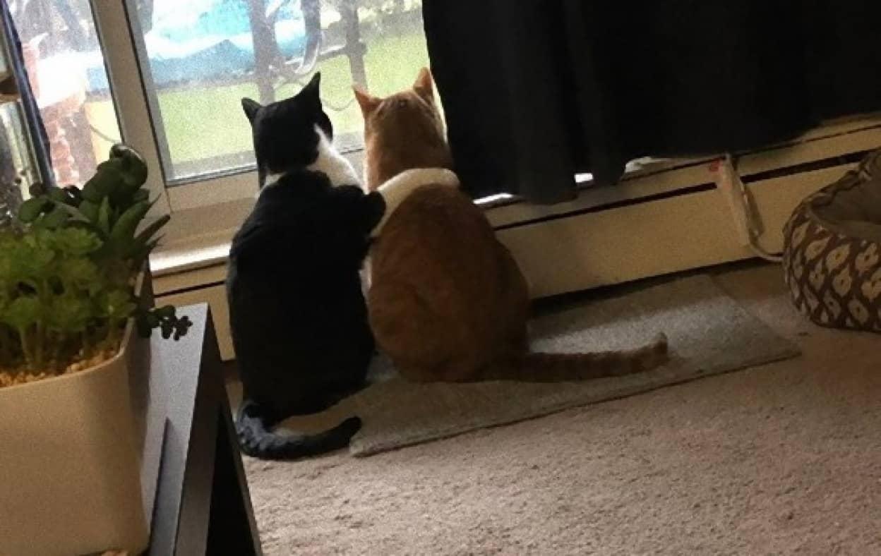 雷雨におびえる仲間の猫を慰める猫