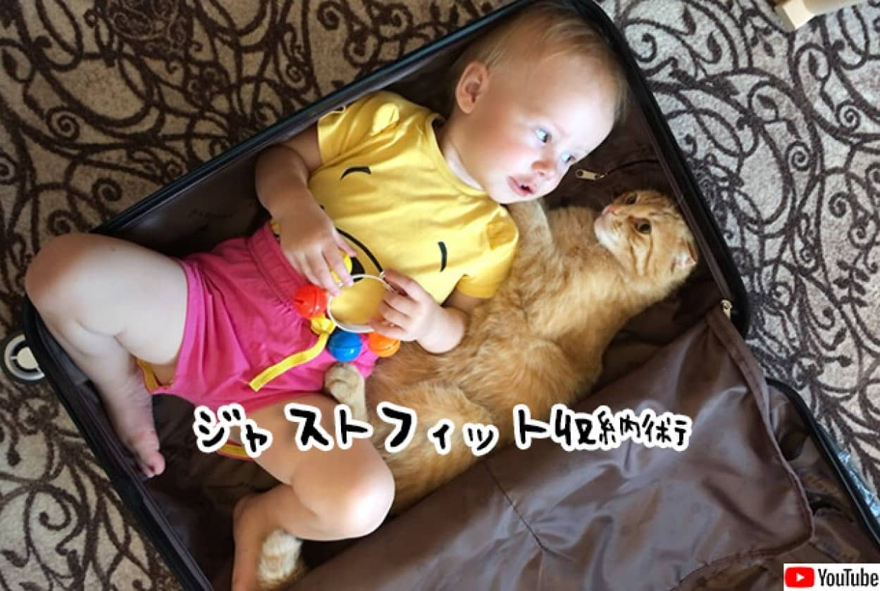 猫と赤ちゃんが1つのスーツケースにぴったり収まる
