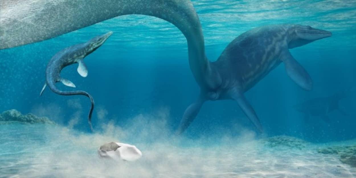 丸い化石の正体は卵