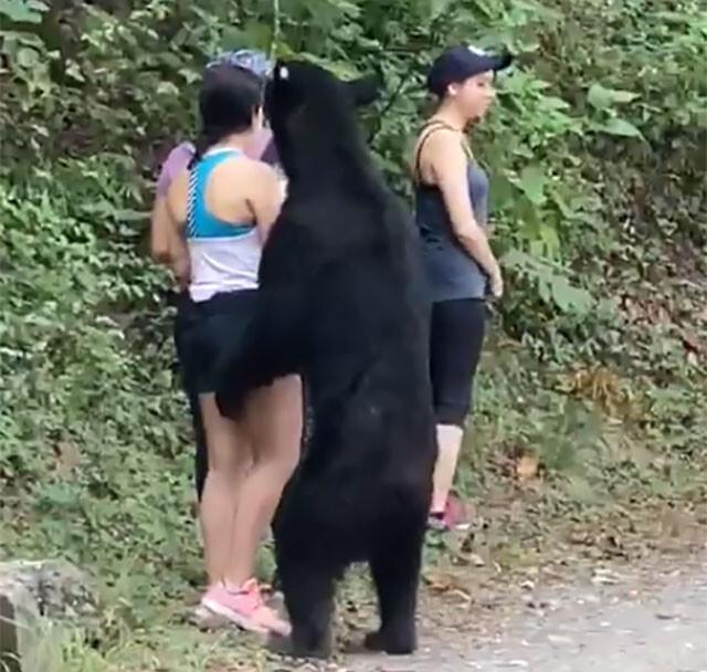 背後に熊、でも動じない
