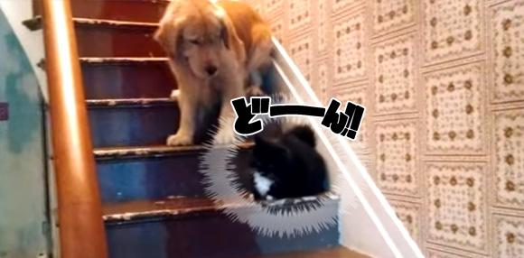 そこに座ってらっしゃるから・・・猫が怖くて階段を降りられない犬に一家総出で救出大作戦