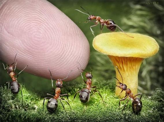 ants_10