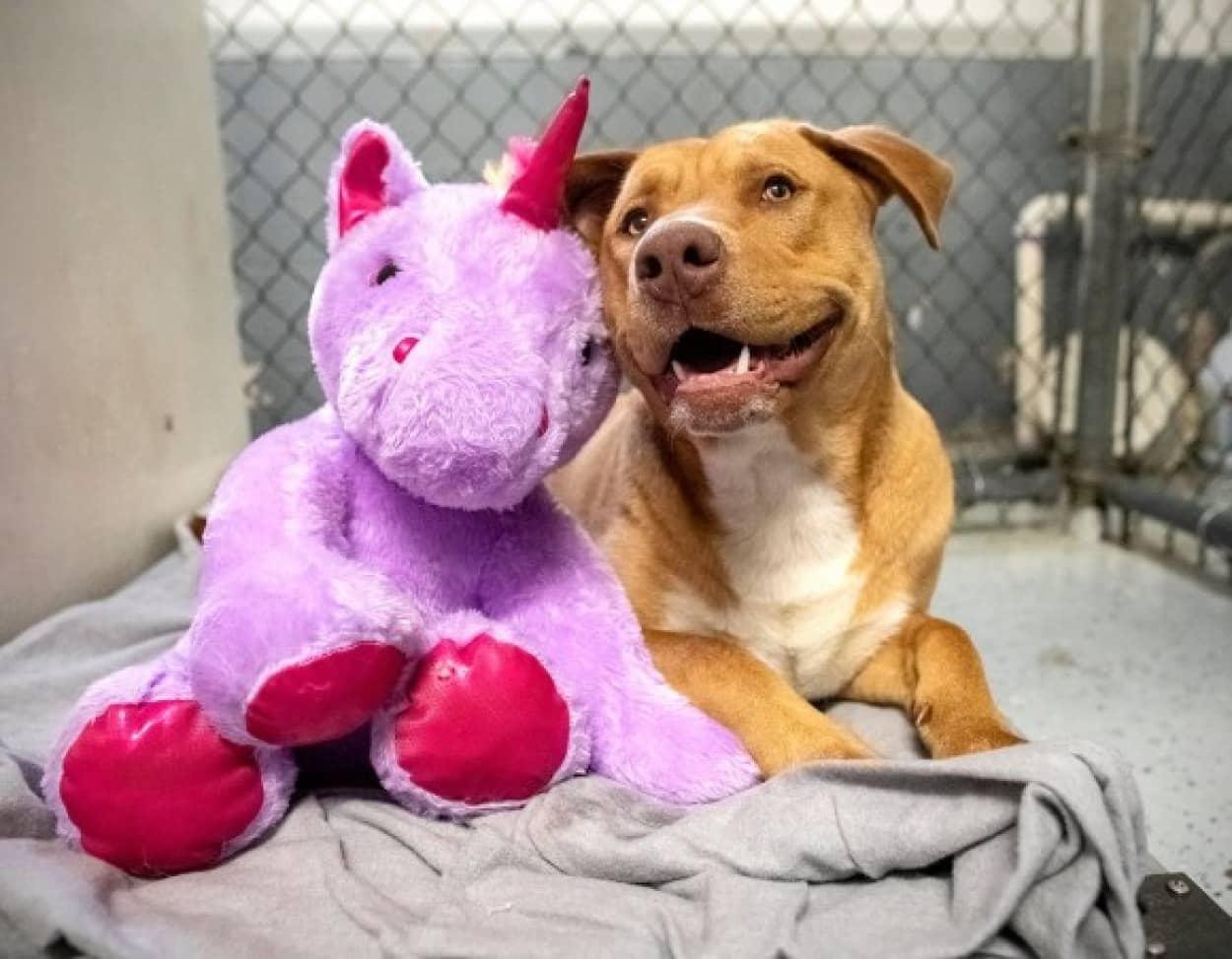 ユニコーンのぬいぐるみがどうしても欲しかった犬、無事に保護され永遠の家へ