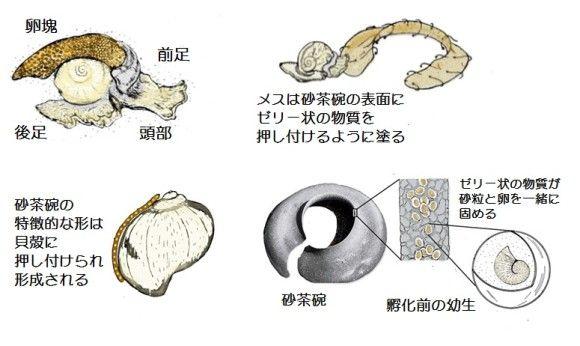 sand-collar_ed_e