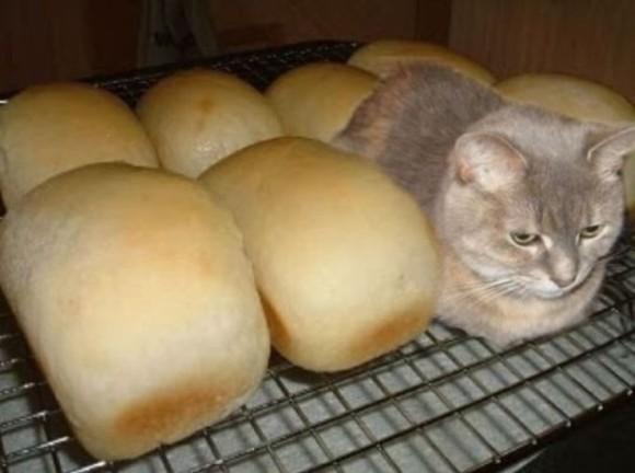 香箱座りしている猫がパンに見えてきたので、本日開店、猫パン屋さん