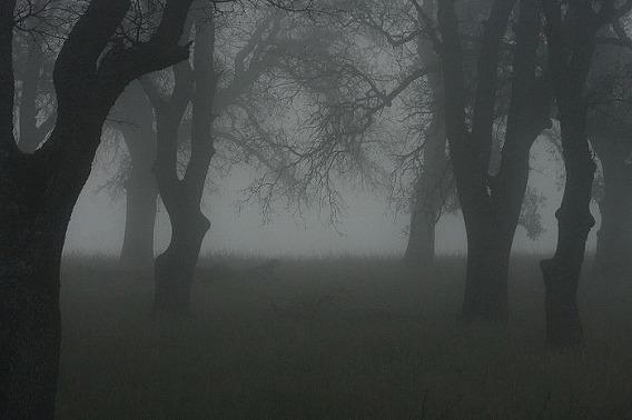 fog_21