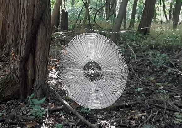 人間が捕まえられるほど巨大な蜘蛛の巣が発見される