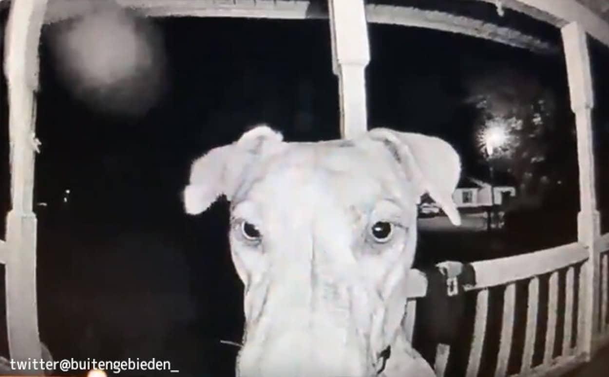 花火の音が怖くて失踪した犬が7.5時間後に帰宅。玄関ドアを鼻で押して知らせる