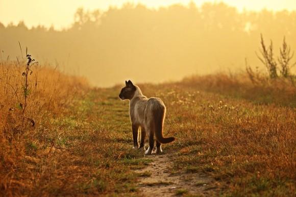 身も心もボロボロの状態で路上をさすらっていた野良猫。人間不信に陥っていた猫が保護され心を開くまでの物語