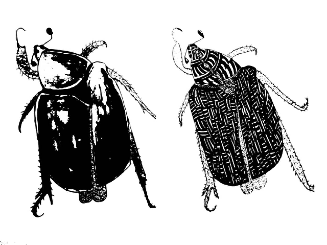 お互いのハネを食べあって愛を深めるゴキブリ