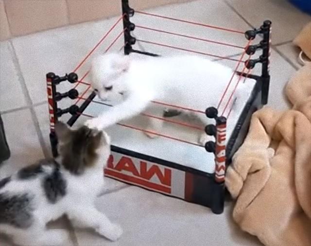 場外乱闘ありの子猫レスリング