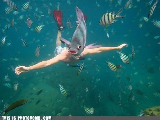 photobomb-that-guy-merman_e