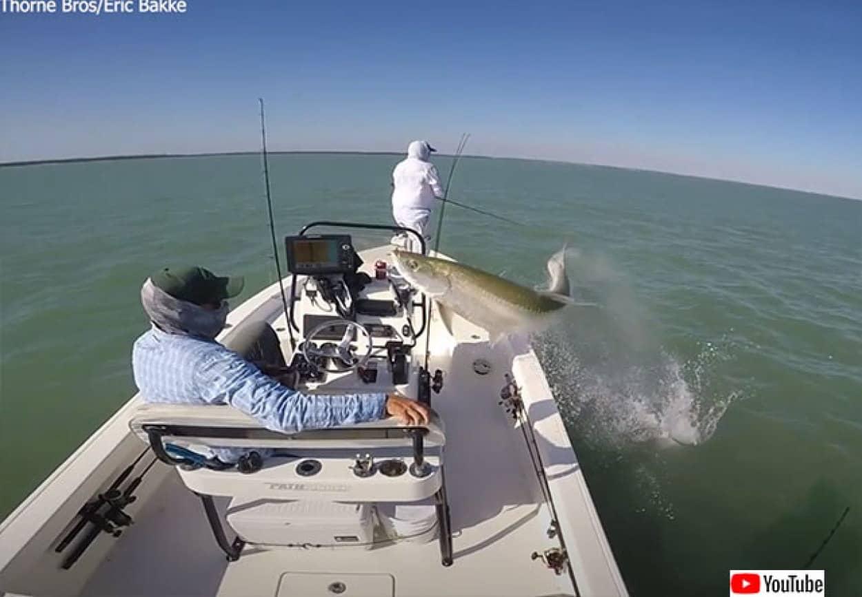 ボートめがけてジャンプし、水中に戻っていく巨大魚ターポン