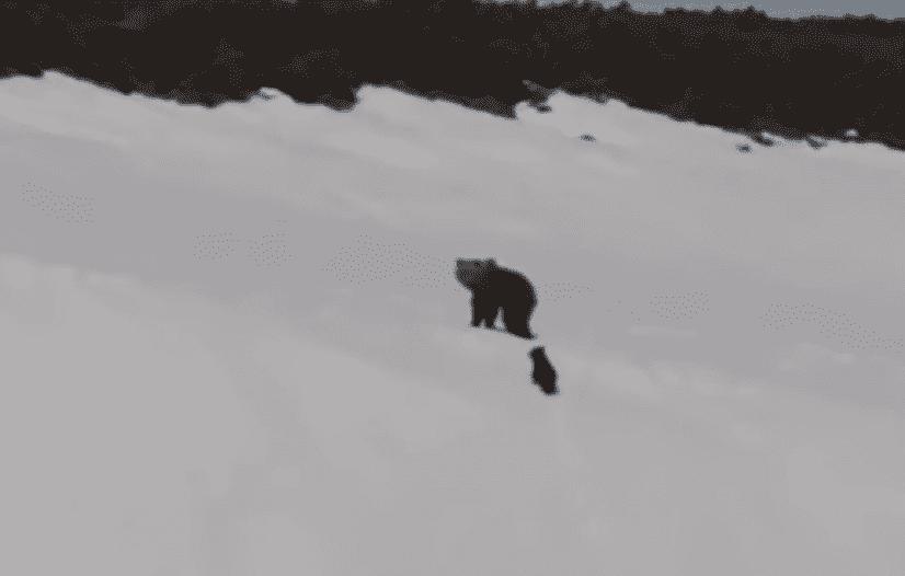 bear0_e