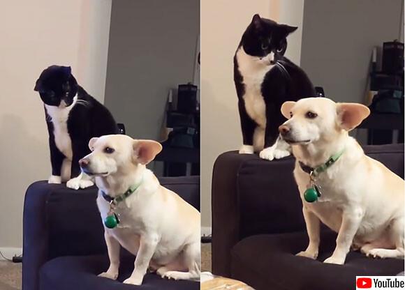 「今犬を叩いたらどうなるだろう?」猫は考えに考えた。でやっちまったら大どんでん返し