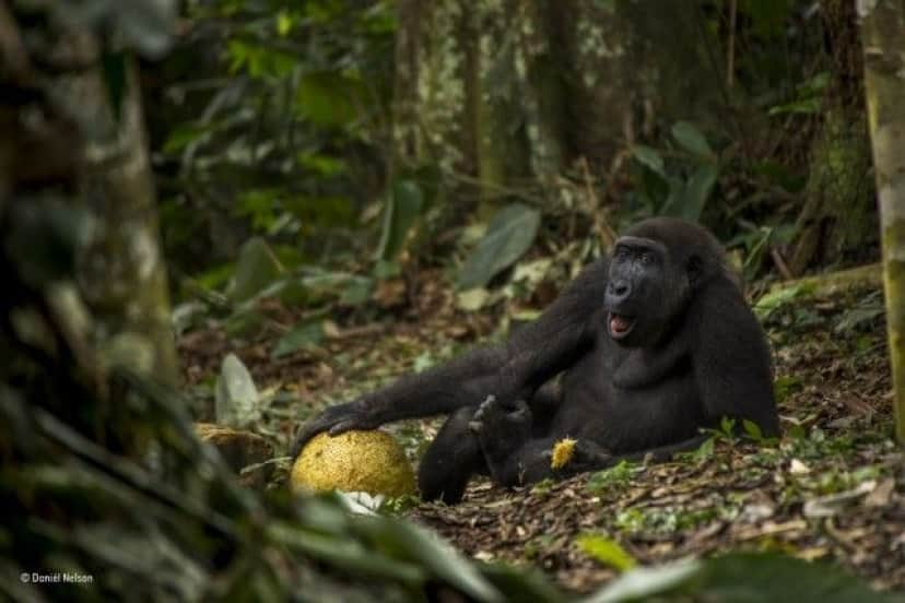wildlife-photographer-of-the-year-2017-78